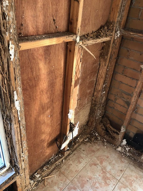 Termite Damage and workings