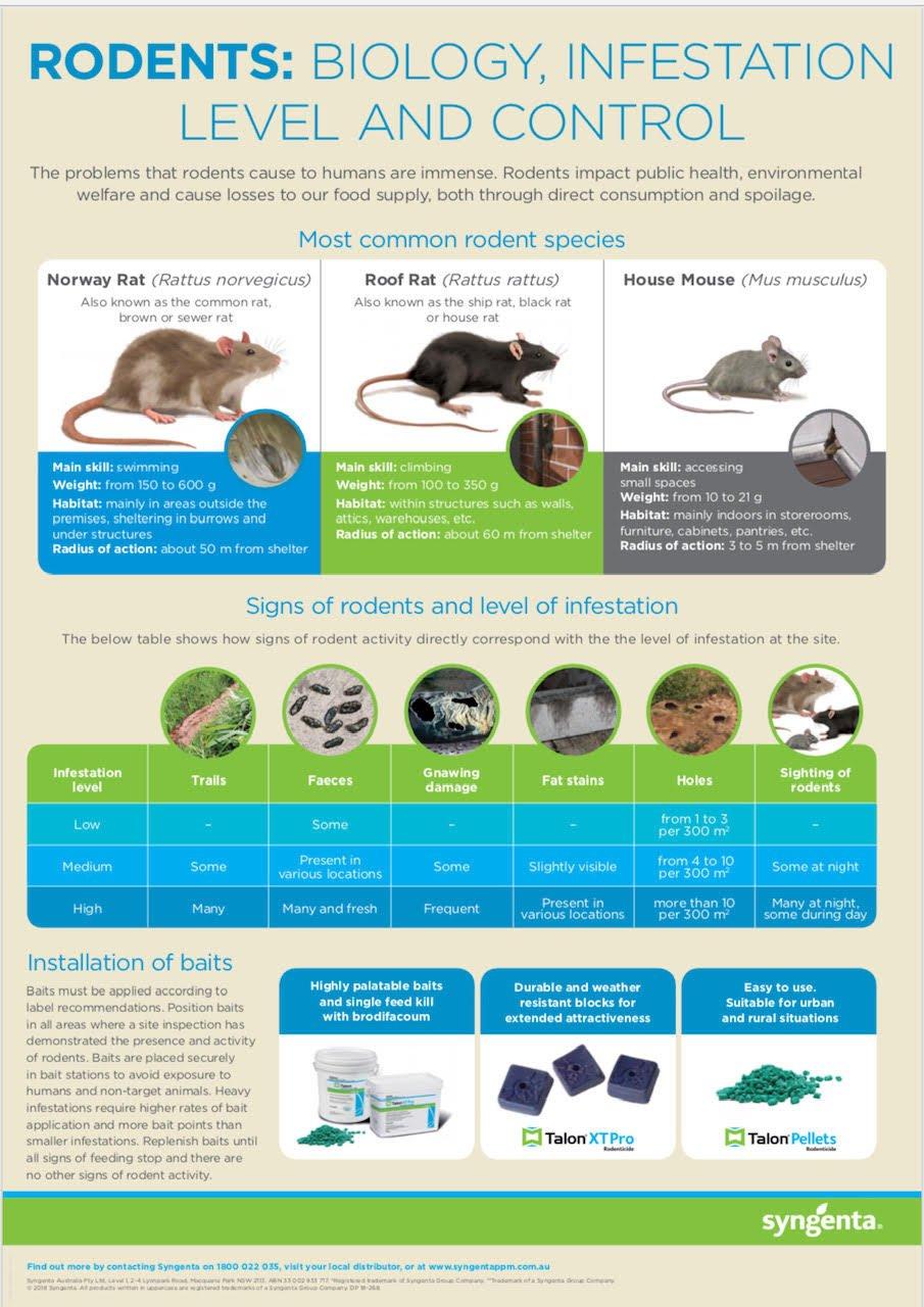 Rats Gold Coast