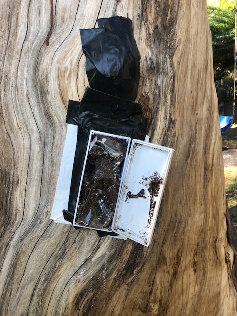 Termite Baiting Gold Coast Tree